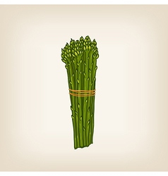 hand drawn bunch of asparaguses vector image