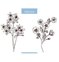 Monochrome hand drawn wildflowers on white vector