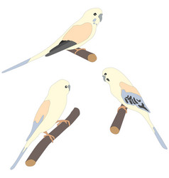 Set of three cute parrot birds sitting on branch vector