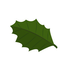 twig of holly leafs isolated on white vector image