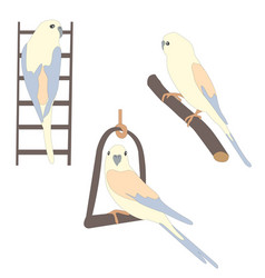 set of three cute parrot birds sitting on branch vector image