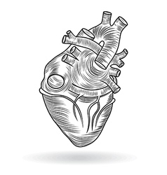button or icon of a human heart vector image vector image