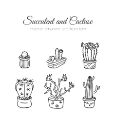 Cactus succulent and cacti vector