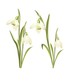 set of snowdrops flowers botanical vector image