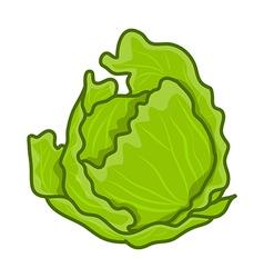 green cabbage cartoon vector image