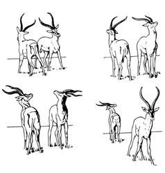 gazelle battle vector image vector image