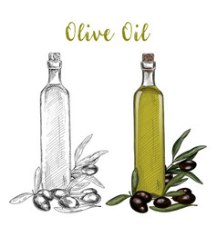 olive oil branch and glassware bottle with cork vector image vector image