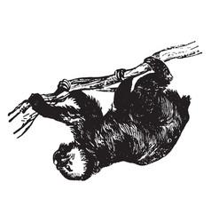 sloth vintage vector image vector image