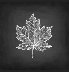 Chalk sketch maple leaf vector