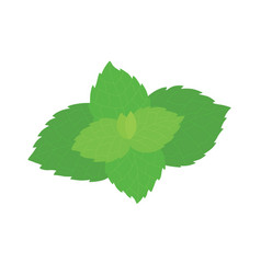 Fresh mint leaves on a white background vector