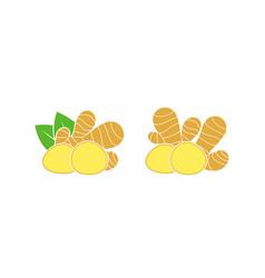ginger logo vector image