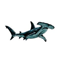 hammerhead shark from a splash watercolor vector image