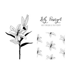 Lily flower design art brush and pattern vector