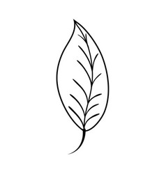Line natural leaf plant botany design vector