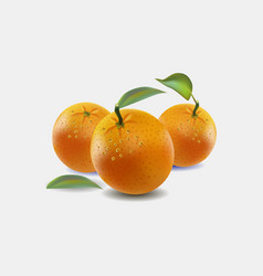Oranges isolated on white b vector