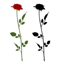 Roses on white vector image