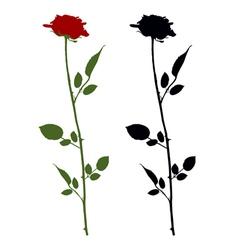 Roses on white vector
