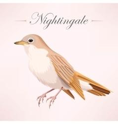 Vintage beautiful nightingale vector