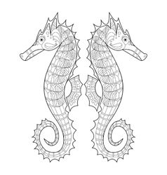 Sea horse coloring for adults vector