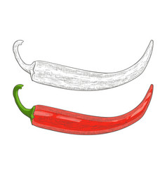 chili pepper black and white and red hand drawn vector image