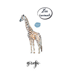 giraffe made in watercolor vector image