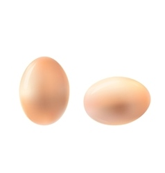 Vertical and horizontal egg vector image