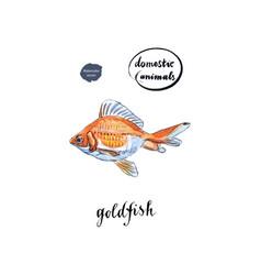 Watercolor orange goldfish vector