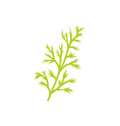 Dill species herb closeup icon vector