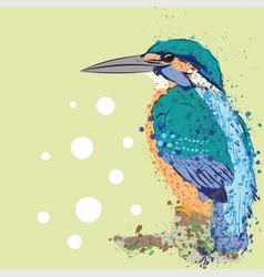 Kingfisher vector