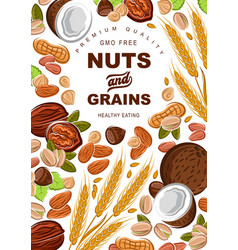 Nuts and cereal grains healthy food vector