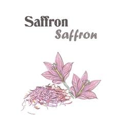 Saffron spice Crocus flower Skech Saffron vector