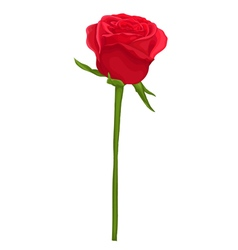 beautiful red rose with long stem isolated on whit vector image vector image