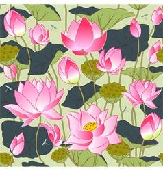 blooming pink lotus flowers vector image