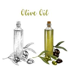 sketched branch of olive oil in glass bottle vector image vector image