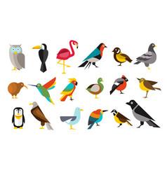 various bird set colorful vector image