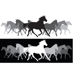white and black trotting horses silhouette vector image