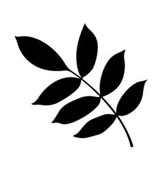Ash tree leaf vector