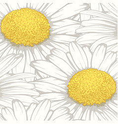 beautiful seamless background with flowers daisy vector image