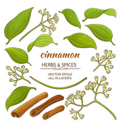 cinnamon elements set vector image
