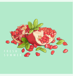 fresh pomegranate on mint vector image