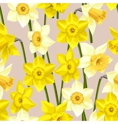 Seamless white and yellow daffodils vector image