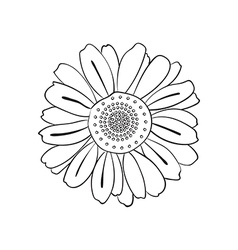 hand drawn daisy doodle style vector image vector image