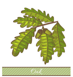 colored oak branch in hand drawn style vector image