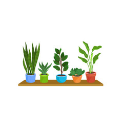 flat set of different houseplants on wooden vector image