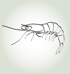 Shrimp in minimal line style vector image