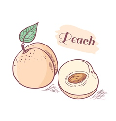 Peach with slice vector