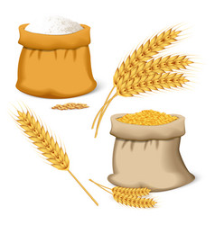 barley wheat icon set realistic style vector image