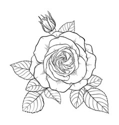 Beautiful monochrome black and white bouquet rose vector