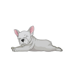 cartoon icon of boston terrier in lying vector image
