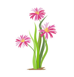 early spring forest and garden flowers isolated on vector image